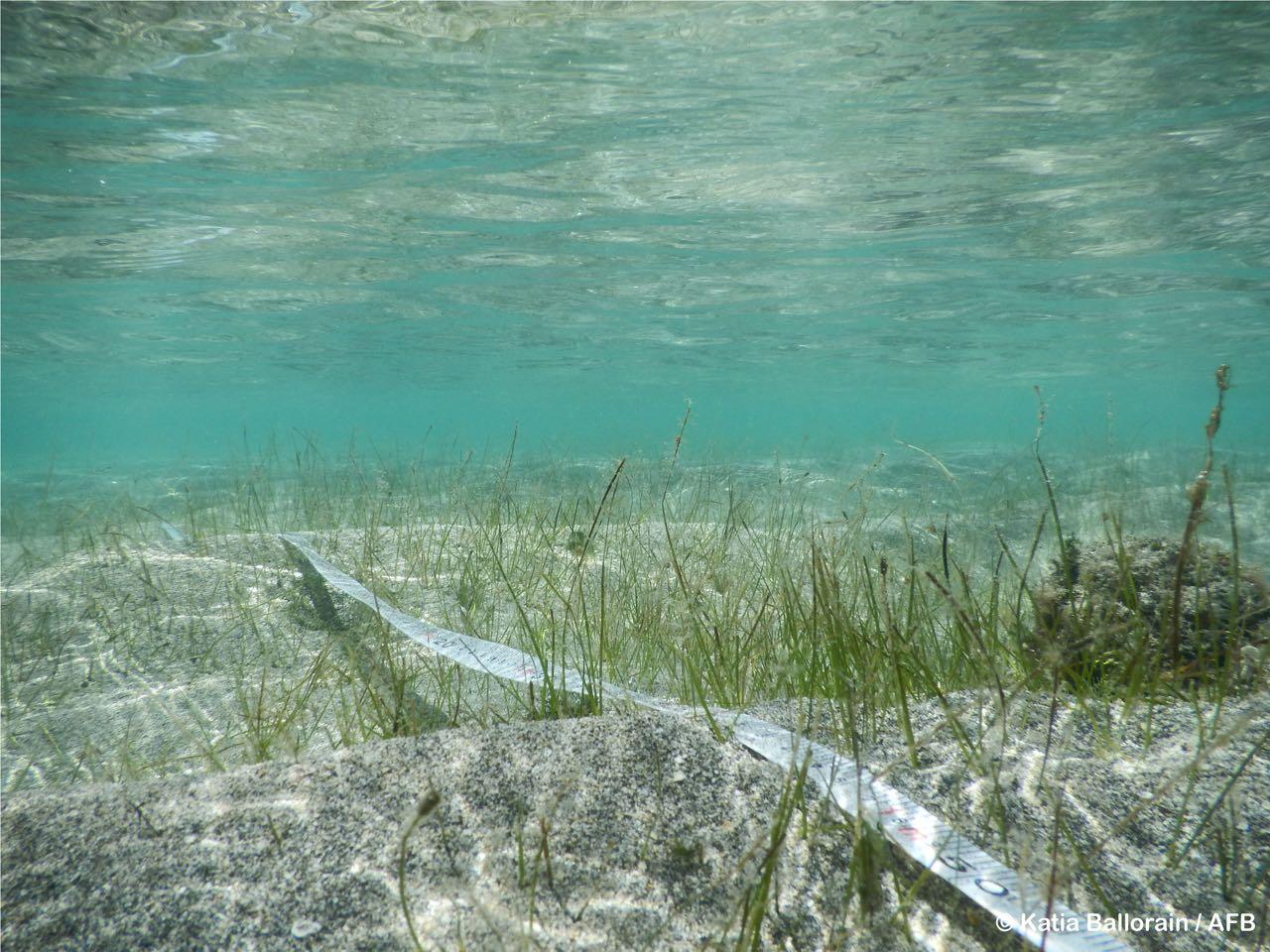 seagrasses-wiosn- - 1