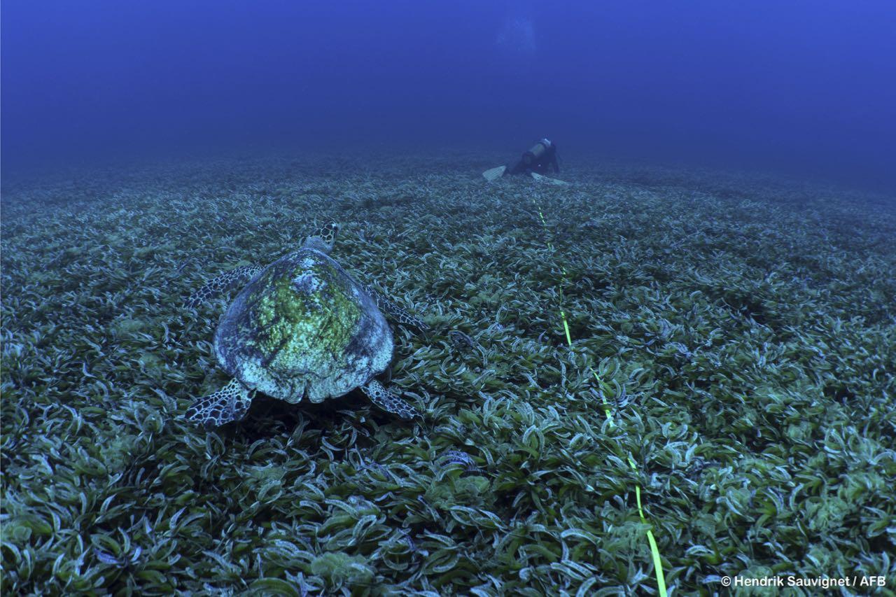 seagrasses-wiosn- - 11