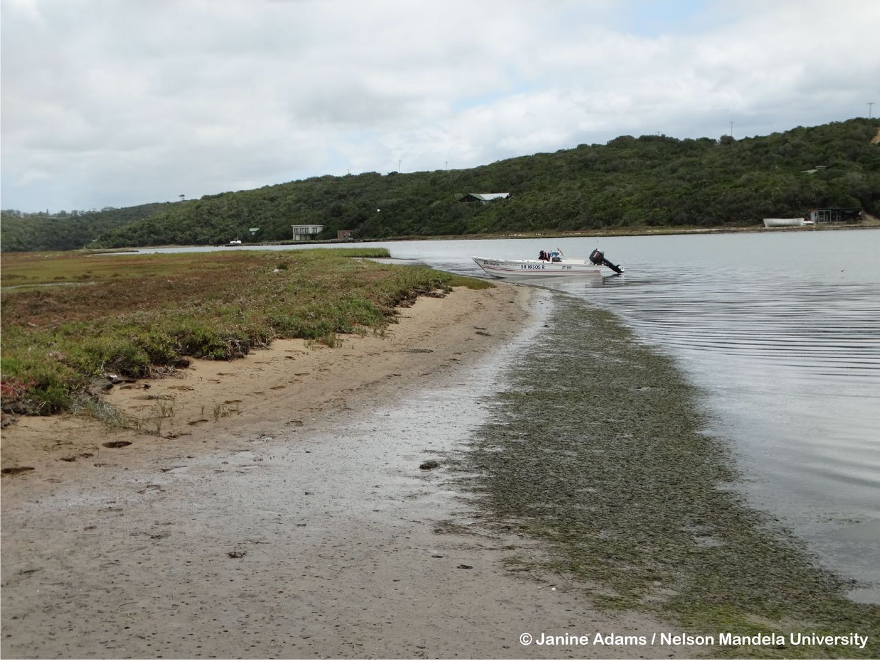 seagrasses-wiosn- - 4