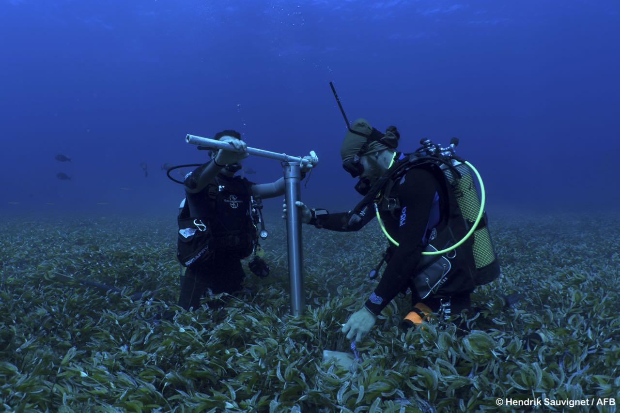 seagrasses-wiosn- - 9